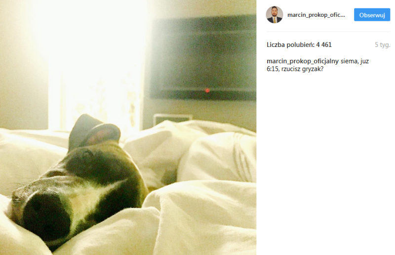 Pies Rufus