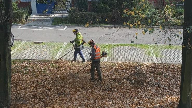 Poprosił o odgarnięcie suchych liści. Służby zaczęły je... kosić [WIDEO]