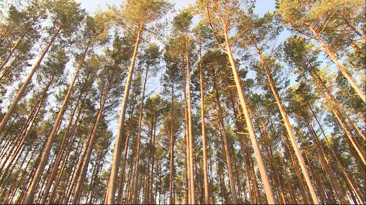 Zagubienia grzybiarzy. Jak odnaleźć drogę w lesie
