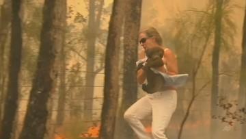 Na ratunek koali. Kobieta zdjęła koszulę i ocaliła zwierzę przed ogniem [WIDEO]