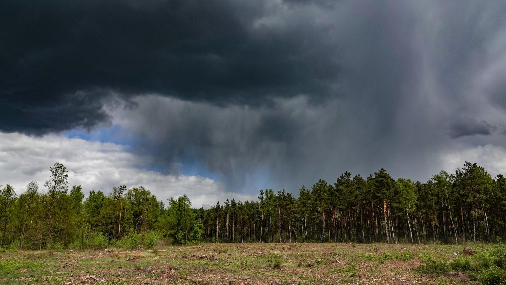 Uroki zielonej pory roku - zdjęcie 3