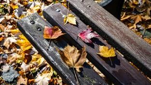 29.10.2020 00:00 Wszystkie barwy jesieni