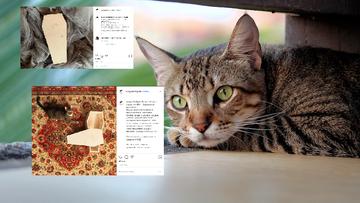"""""""Myślimy nie tylko o ludziach"""". Sklep internetowy sprzedaje trumny dla kotów"""