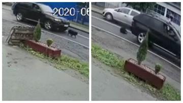 Ruszył z impetem i wjechał w psa. Zrobił to celowo [WIDEO]
