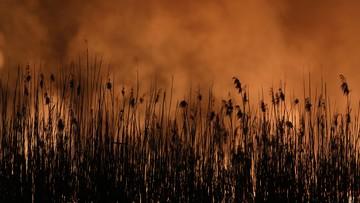 Dym z płonącego Biebrzańskiego Parku Narodowego dotarł nad Warszawę