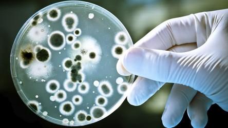 """Już ponad 3 tysiące zakażonych bakterią, która """"uciekła"""" z chińskiego laboratorium"""